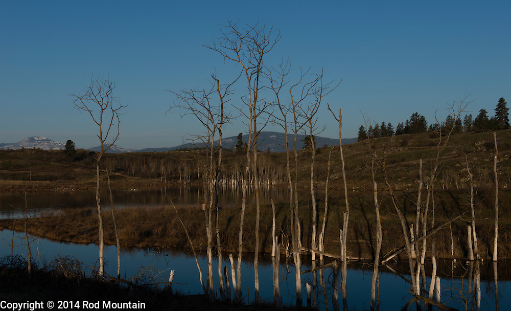 A natural wetland provides for an interesting scene in the Okanagan.