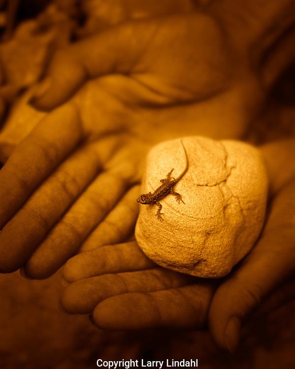 Baby lizard on rock in hands