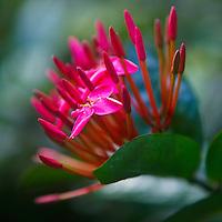 Macro shot of flowers at Rayawadee resort, Krabi Thailand