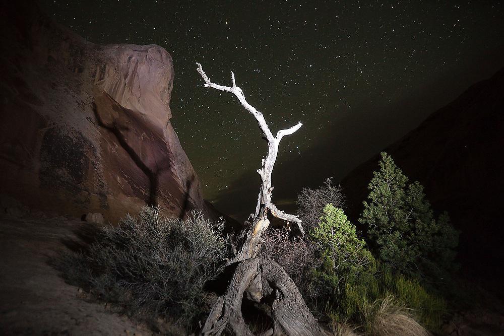 Detail of a dead tree snag at night outside Wild Horse Window, San Rafael Swell, Utah.