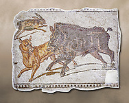 First half of the 3rd century AD Roman mosaic depiction  a wild boar and hare hunt. From Hadrumetum (Sousse), Tunisia.  The Bardo Museum, Tunis, Tunisia. .<br /> <br /> If you prefer to buy from our ALAMY PHOTO LIBRARY  Collection visit : https://www.alamy.com/portfolio/paul-williams-funkystock/roman-mosaic.html - Type -   Bardo    - into the LOWER SEARCH WITHIN GALLERY box. Refine search by adding background colour, place, museum etc<br /> <br /> Visit our ROMAN MOSAIC PHOTO COLLECTIONS for more photos to download  as wall art prints https://funkystock.photoshelter.com/gallery-collection/Roman-Mosaics-Art-Pictures-Images/C0000LcfNel7FpLI