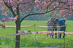 ©Licensed to London News Pictures 10/04/2020  <br /> Greenwich, UK. A small group of friends having a photoshoot. The famous cherry blossom trees in Greenwich park, London have been cordoned off by police over Coronavirus social distancing fears. Photo credit:Grant Falvey/LNP