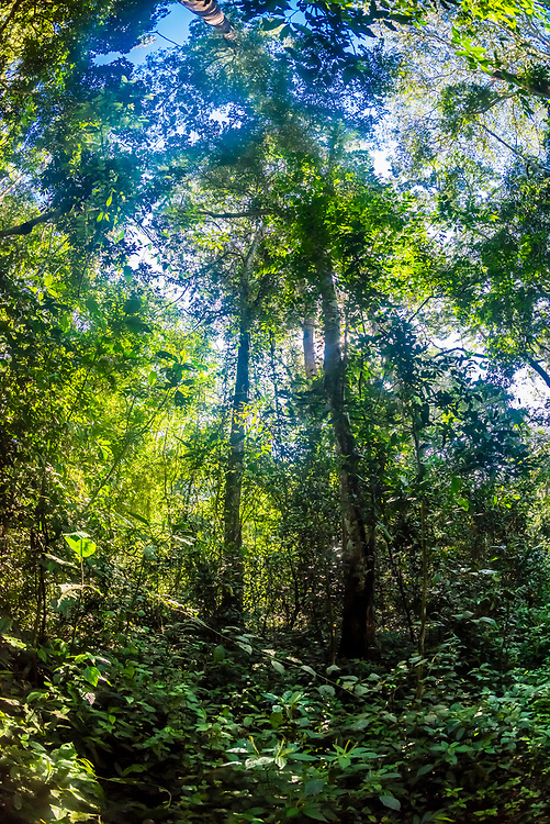 Kibale Forest National Park, home of the largest number of primates of any national park in the world, Uganda.