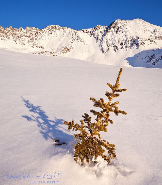 A full day of exploring the backcountry of the Ten Mile Range led me to a solitary tree in the vast wilderness. What appears to be a small sapling is actually the tip of a larger tree covered in snow.