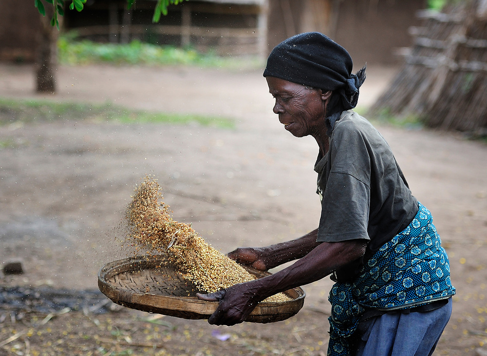 """A woman winnows grain in Chidyamanga, a village in southern Malawi that has been hard hit by drought in recent years, leading to chronic food insecurity, especially during the """"hunger season,"""" when farmers are waiting for the harvest."""