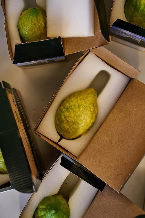Germany, Berlin, 2017/10/01<br /> <br /> Etrog, a citrus fruit is displayed for sale at a sukkot market ahead of the festivities at Kahal Adass Jisroel, an orthodox community in Berlin.