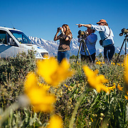 A Teton Science Schools wildlife tour stops to explore the balsamroot flowers along the Antelope Flats Road in Grand Teton National Park, Wyoming.(Matthew Bart, Maura Bushior, Katie-Cloe Stock, Lead Guide Dawson)