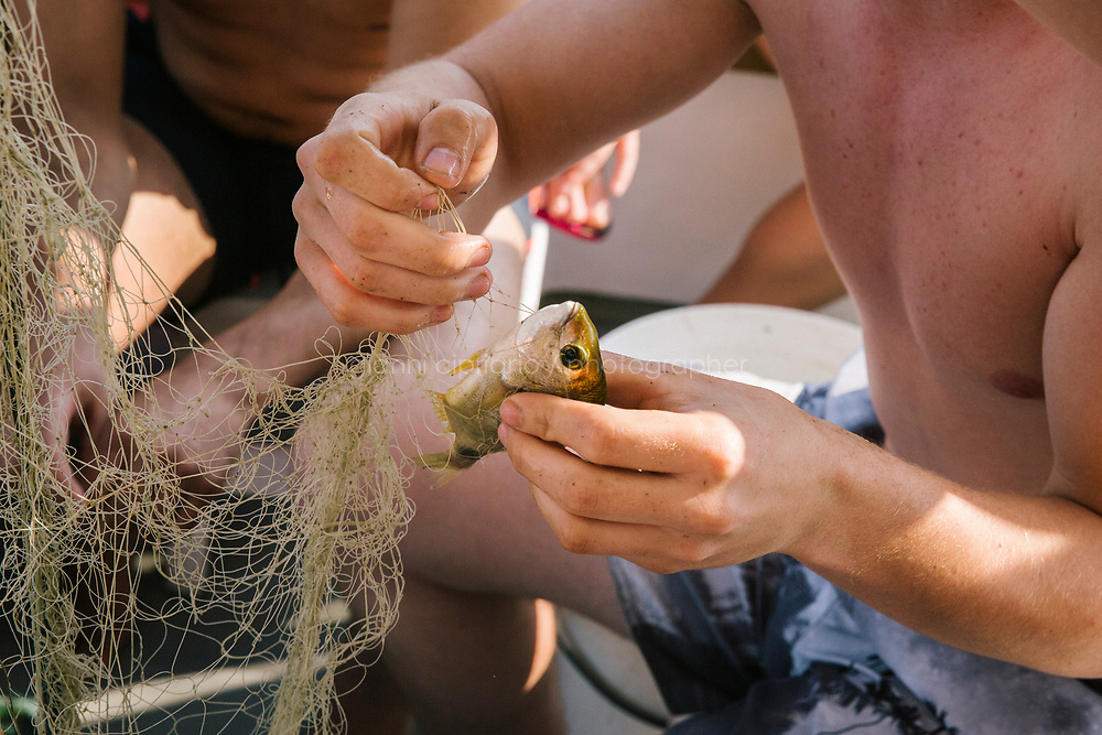 """TALAMONE, ITALY - 27 AUGUST 2019: A visitor untangles a diplodus from the net on the """"Sirena"""", Paolo's fishing boat in Talamone, Italy, on August 27th 2019.<br /> <br /> In 2006, fisherman Paolo Fanciulli used government funds and the donations from his loyal excursion clients to fund a project in which they protected the local waters from trawling by dropping hundreds of concrete blocks around the seabed. But his true dream was to lay down works of art down on the sea floor off the coast of Tuscany. His underwater art dreams came true when the owner of a Carrara quarry, inspired by Mr. Fanciulli's vision, donated a hundred marble blocks to the project.<br /> Mr. Fanciulli invited sculptors to work the marble and set up kickstarter accounts, boat tours and dinners to fund the project. The acclaimed British artist Emily Young carved a ten-ton """"Weeping Guardian"""" face, which was lowered with other sculptures into the water in 2015.<br /> Since then, coral and plant life have covered the sculptures and helped bring back the fish. And Paolo the Fisherman is catching as many of them as he can."""