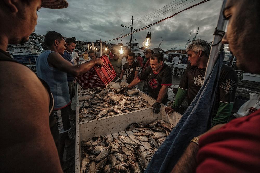 Brazil, Amazonas, rio Negro, Manaus. Marche aux poissons.