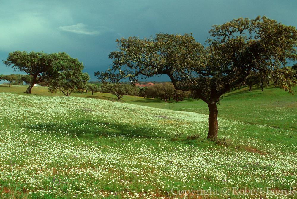 PORTUGAL, ALENTEJO REGION Cork trees and wildflowers near Evora