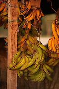 Bananas in market, Belize