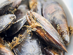 Close-up of fresh mussels, Getxo, Algorta, Basque Country, Biscay, Spain, Europe