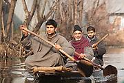 Three men paddle along the backwaters of Dal Lake, Srinagar, Kashmir, India
