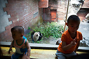 People at Beijing zoo come to visit the large panda enclosures, Beijing, China. Located in the Xicheng District. Beijing Zoo is best known for its collection of rare animals endemic to China including the Giant Pandas, which are zoo's most popular animals.