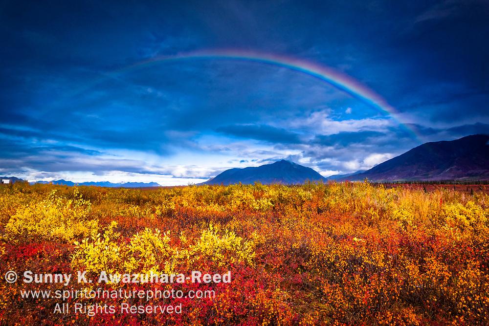 Rainbow over fall colored tundra. Alaska Range is in the background. Cantwell, Interior Alaska, Autumn.