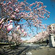 Rawlins Park   Washington DC