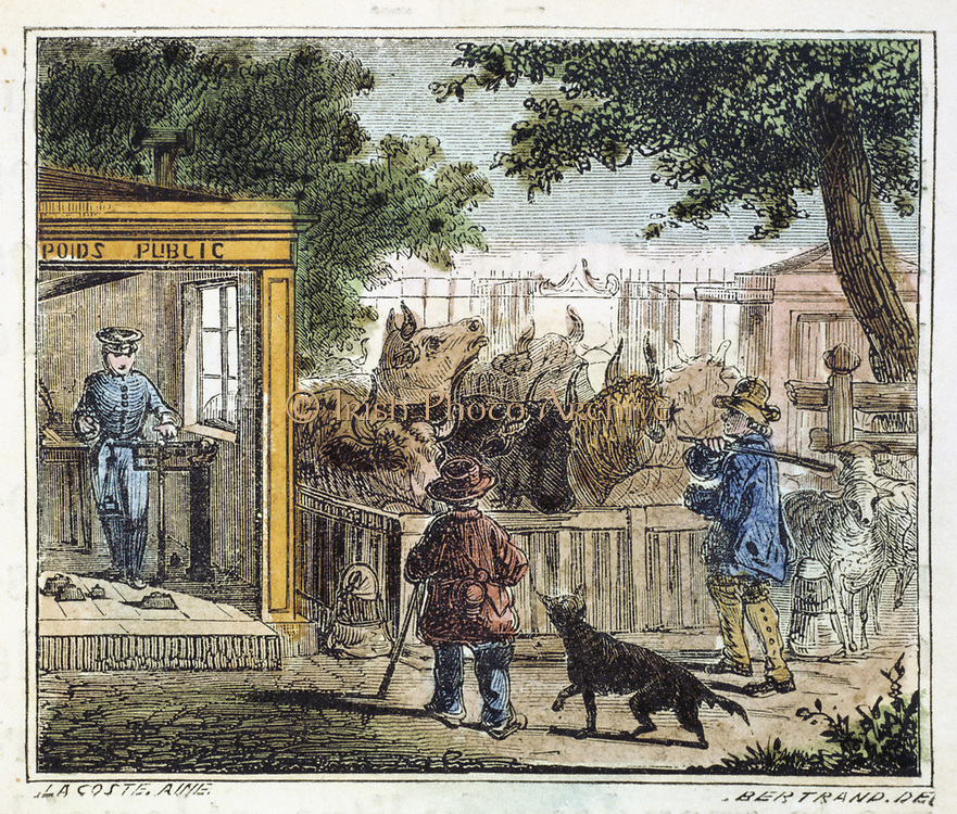 Public weighbridge used to weigh cattle in a market.  Animals are placed weighing platform and attendant in kiosk weighs them using a  weighing machine based on the principle of the steelyard.  From 'Alphabet des Arts et Metiers', (Paris, 1867) Engraving.
