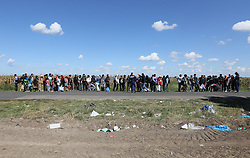 © London News Pictures. Migrants  queue for a bus close to the Hungarian and Serbian border town of Roszke, Hungary, September 7 2015. The UN's humanitarian agencies are on the verge of bankruptcy and unable to meet the basic needs of millions of people because of the size of the refugee crisis in the Middle East, Africa and Europe, senior figures within the UN have told the media.   Picture by Paul Hackett /LNP