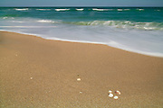 Atlantic Ocean waves grind empty shells on the Cape Canaveral National Seashore into sand. Many of the sand grains found on Florida beaches are made up of shell and coral fragments.