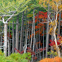 Fall Gallery