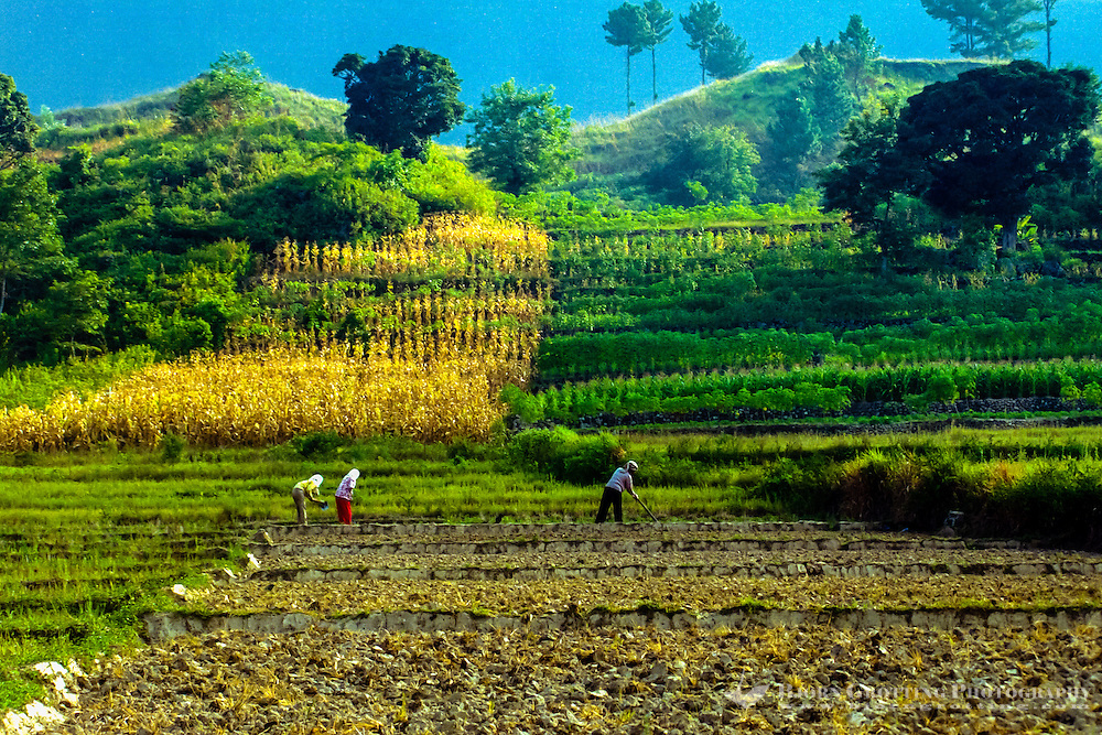 Indonesia, Sumatra. Samosir. Farming on Tuk Tuk. Tourism is an important industry here, but also farming employs a large number of people.