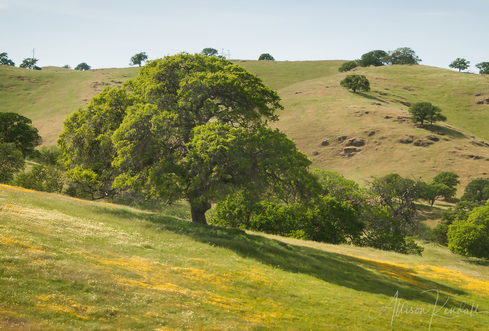 Pastoral hills and valleys of Sonoma County, California