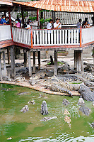 Crocodiles Samphran Elephant Ground & Zoo Nakhon Pathom province Thailand