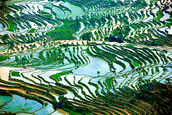 Photo taken on April 14, 2016 shows terraced fields in Baohua Township of Honghe County, southwest China's Yunnan Province. Local farmers have started transplanting of rice seedlings in the terraced fields in recent days. EXPA Pictures © 2016, PhotoCredit: EXPA/ Photoshot/ Wen Zhenxiao<br /> <br /> *****ATTENTION - for AUT, SLO, CRO, SRB, BIH, MAZ, SUI only*****