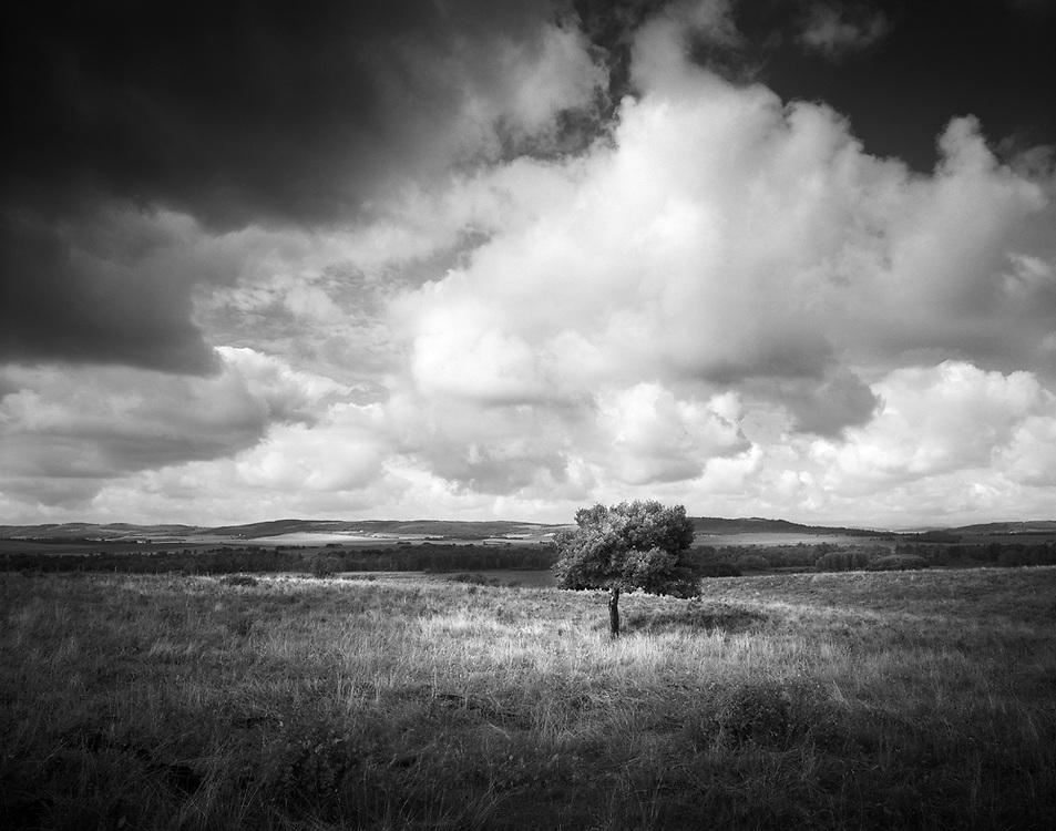Lonesome tree on the Prairies