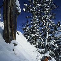 Tom Jungst (MR) skiing at Bridger Bowl, Montana.