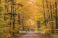 64776-01404 Road in fall color Schoolcraft County Upper Peninsula Michigan