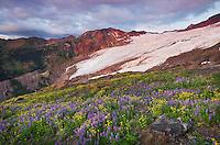 Bastille Ridge and Coleman Glacier from meadows of Heliotrope Ridge, Mount Baker Wilderness North cascades Washington