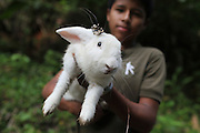 """A young Ngäbe boy from the community of Junquito holds his pet rabbit named """"bogs"""" - after Bugs Bunny. COCABO: Junquito, Almirante, Changuinola, Bocas del Toro, Panamá. September 1, 2012."""