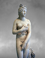 2nd century AD Roman marble sculpture of Aphrodite (Venus), 'Dresden Capitoline Type, copied from a Hellanistic Greek original,  inv 6238, Museum of Archaeology, Italy, grey art background ..<br /> <br /> If you prefer to buy from our ALAMY STOCK LIBRARY page at https://www.alamy.com/portfolio/paul-williams-funkystock/greco-roman-sculptures.html . Type -    Naples    - into LOWER SEARCH WITHIN GALLERY box - Refine search by adding a subject, place, background colour, etc.<br /> <br /> Visit our ROMAN WORLD PHOTO COLLECTIONS for more photos to download or buy as wall art prints https://funkystock.photoshelter.com/gallery-collection/The-Romans-Art-Artefacts-Antiquities-Historic-Sites-Pictures-Images/C0000r2uLJJo9_s0