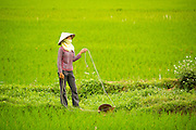 04 APRIL 2012 - HA LONG, VIETNAM:   A Vietnamese woman in a rice paddy near the city of Ha Long in northern Vietnam.   PHOTO BY JACK KURTZ