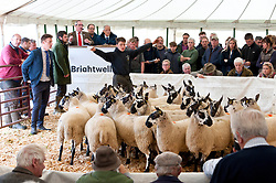 © Licensed to London News Pictures. 14/09/2018. Llanelwedd, Powys, Wales, UK.  Auctioning begins at 10 o'clock for the 38th Annual Special Sale of 12,200 Welsh Mules which takes place at the Royal Welsh Showground Llanelwedd, Powys. Welsh Mule sheep are breeding ewes used by sheep farmers to produce the finest quality lambs for today's discerning consumers, and are the progeny of a registered Bluefaced Leicester ram crossed with the Welsh Mountain, Beulah or Welsh Hill Speckled-face ewes, all hardy, healthy Welsh hill breeds which impart their best qualities to their offspring. Photo credit: Graham M. Lawrence/LNP
