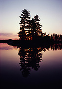 White pine reflected in Nym Lake, Quetico Provinicial Park, Ontario, Canada.