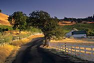 Morning light over country road near Gerber Vineyards, Murphys, Calaveras County, California