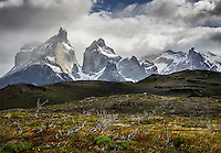 The Cuernos del Paine and Mont Almirante Nieto set behind fire a damaged foreground - Torres del Paine, Chile.