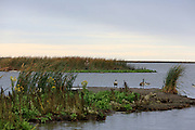 Hunting from a small island in the Delta Marsh.