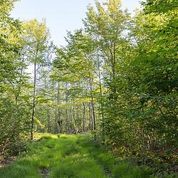 43.46775, -71.16239. Birch Ridge location C. Facing south. New Durham, New Hampshire.