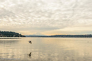 Mt Rainier stands prominently at the end of Lake Washington.