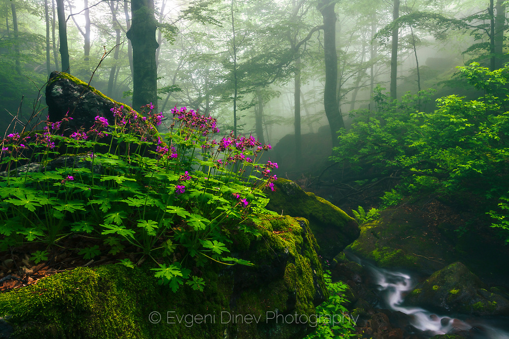 Wild flowers by the river in a misty forest at spring time