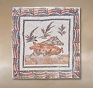 3rd century Roman mosaic panel of a boar and a sow lying down. From Thysdrus (El Jem), Tunisia.  The Bardo Museum, Tunis, Tunisia. .<br /> <br /> If you prefer to buy from our ALAMY PHOTO LIBRARY  Collection visit : https://www.alamy.com/portfolio/paul-williams-funkystock/roman-mosaic.html - Type -   Bardo    - into the LOWER SEARCH WITHIN GALLERY box. Refine search by adding background colour, place, museum etc<br /> <br /> Visit our ROMAN MOSAIC PHOTO COLLECTIONS for more photos to download  as wall art prints https://funkystock.photoshelter.com/gallery-collection/Roman-Mosaics-Art-Pictures-Images/C0000LcfNel7FpLI