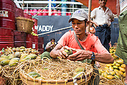 13 JUNE 2013 - YANGON, MYANMAR:  A man sorts mangoes offloaded on the Yangon docks. Yangon's docks and waterfront district is the heart of the Myanmar economy. Imports are brought in by ocean freighter and repacked onto river freighters for shipment within Myanmar while exports are brought to Yangon on river boats and then exported on ocean going cargo ships.   PHOTO BY JACK KURTZ