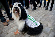 Dog supports his master. Union members at the N30 demonstration march protest in London as the public sector strike over pensions, this disrupted schools, hospitals and other services.