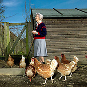 A lifelong lover of chickens, Deborah Devonshire in the pen with her brown and buff crossbreeds at her home on the Chatsworth Estate, Derbyshire. Deborah Vivien Cavendish, the Dowager Duchess of Devonshire, née The Hon. Deborah Freeman-Mitford, is the youngest and last surviving of the six Mitford sisters whose political affiliations and marriages were a prominent feature of English culture in the 1930s and 1940s.