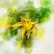 Arbor Day concept Digitally enhanced image of a Yellow tomato blossom on a tomato bush