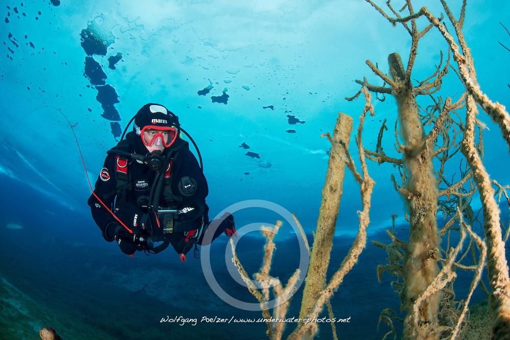 Taucher unter Eis, Eistaucher, Eistauchen, scuba diver under ice, scuba icediving, Lechausee, Reutte, Weissenbach, Tirol, Oesterreich, Tyrol, Austria, MR Yes
