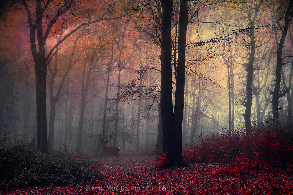 Stag in a forest on a misty December morning - manipulated photograph edited with texture overlays